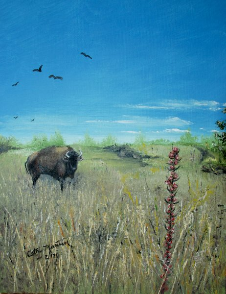 Prairie Buffalo By Cathy Martin