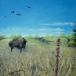 Oil painting of Prairie Buffalo by Cathy Martin