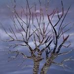 Mirror Tree mixed media art by Cathy Martin